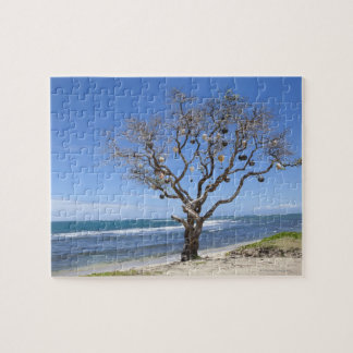 A tree decorated with old buoys on the beach in jigsaw puzzle