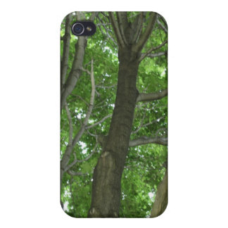 A tree high view into the forest! covers for iPhone 4