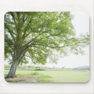 A tree in the field of grass mouse mat