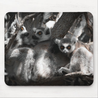 A trio of South African Lemurs Mouse Pad