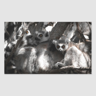 A trio of South African Lemurs Rectangular Sticker