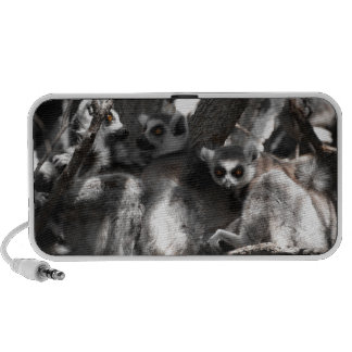 A trio of South African Lemurs Travel Speakers