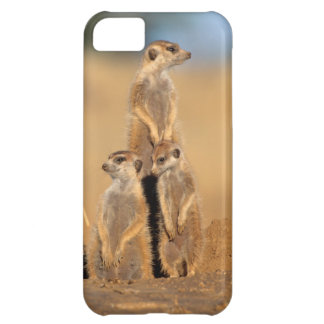 A trio of Suricates sunning at their den iPhone 5C Case