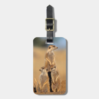 A trio of Suricates sunning at their den Luggage Tag