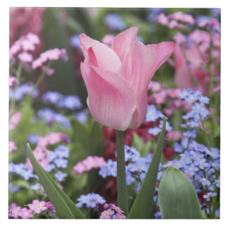 A tulip at Luxembourg Gardens, Paris, France Large Square Tile