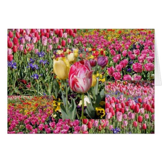 a tulip card