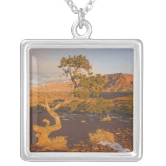 A Utah Juniper Juniperus osteosperma) tree in Silver Plated Necklace
