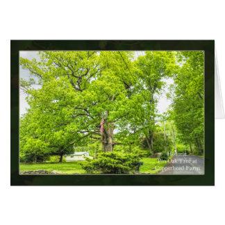 A Venerable Old Pin Oak Tree Card