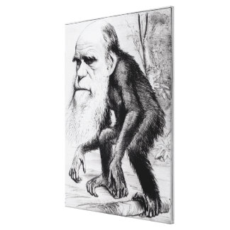 A Venerable Orang Outang, from 'The Hornet' Canvas Print