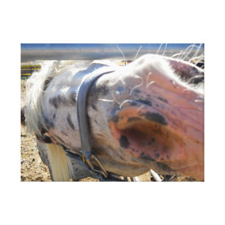 A very curious horse. canvas print