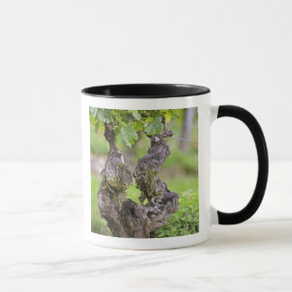 A very old vine in the Clos de l'Echo vineyard Mug