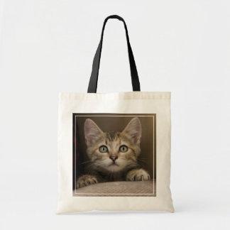 A Very Sweet Tabby Kitten