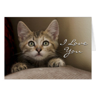 A Very Sweet Tabby Kitten Card
