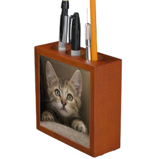A Very Sweet Tabby Kitten Desk Organiser