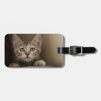 A Very Sweet Tabby Kitten Luggage Tag