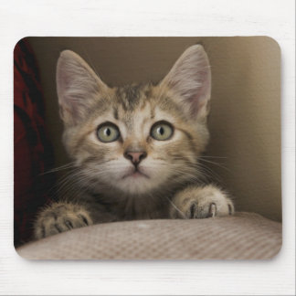 A Very Sweet Tabby Kitten Mouse Pad