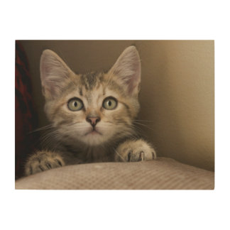 A Very Sweet Tabby Kitten Wood Wall Art