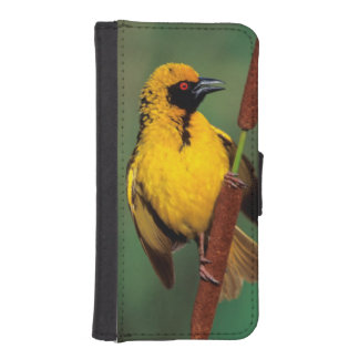 A Village Weaver calling while perched on a reed iPhone SE/5/5s Wallet Case