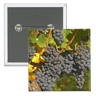 A vine with ripe Merlot grape bunches - Chateau 15 Cm Square Badge