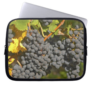 A vine with ripe Merlot grape bunches - Chateau Laptop Sleeves