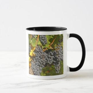 A vine with ripe Merlot grape bunches - Chateau Mug