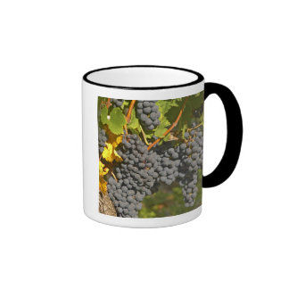 A vine with ripe Merlot grape bunches - Chateau Ringer Mug