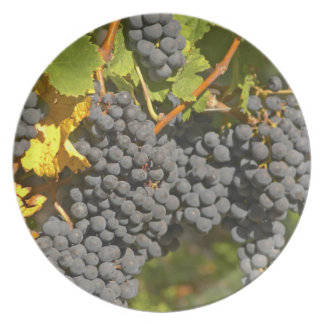 A vine with ripe Merlot grape bunches - Chateau Party Plate
