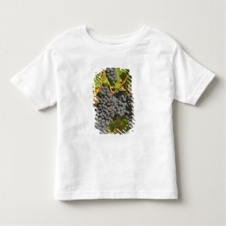 A vine with ripe Merlot grape bunches - Chateau Shirts
