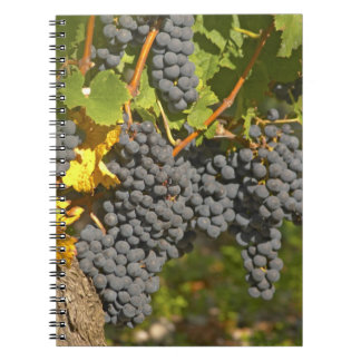 A vine with ripe Merlot grape bunches - Chateau Spiral Note Book