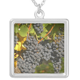 A vine with ripe Merlot grape bunches - Chateau Square Pendant Necklace