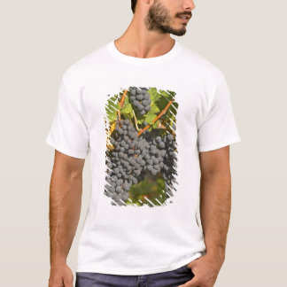 A vine with ripe Merlot grape bunches - Chateau T-Shirt
