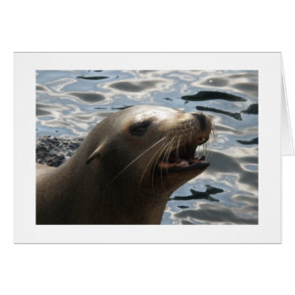 A Vocal Sea Lion Note Card