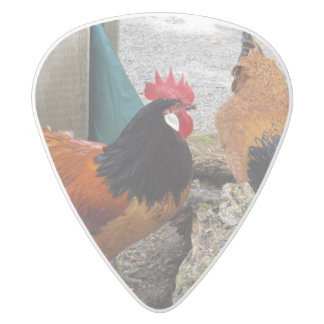 A Vorwerks Chicken pair, Rooster and Hen Eating White Delrin Guitar Pick