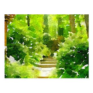A Walk Among the Ferns Postcard
