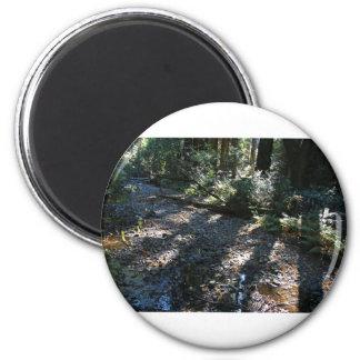 A Walk in Muir Woods 6 Cm Round Magnet
