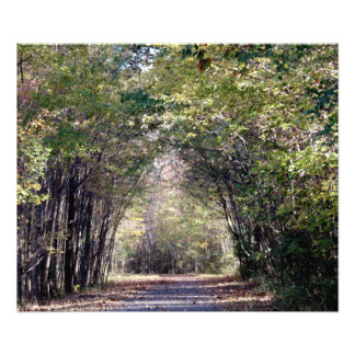 A walk in the woods photo print