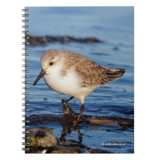 A Wandering Sanderling Spiral Notebooks