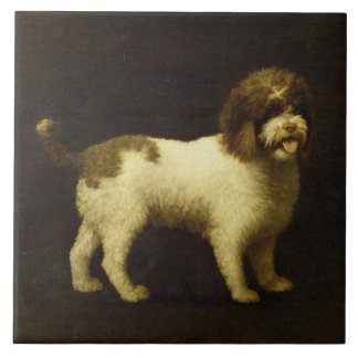 A Water Spaniel, 1769 (oil on canvas) Large Square Tile