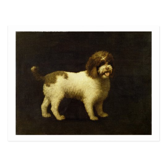 A Water Spaniel, 1769 (oil on canvas) Postcard