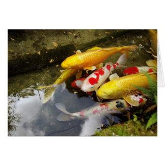 A waterway full of Japanese koi carps Card