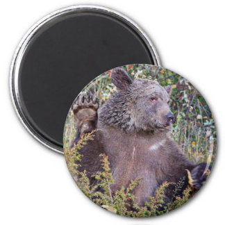 A Waving Grizzly Bear Refrigerator Magnet