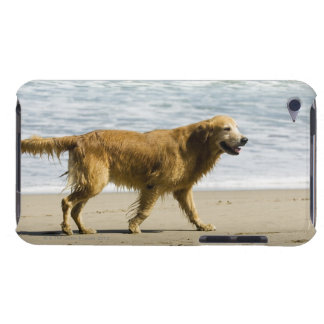 A wet dog at the beach. iPod Case-Mate cases