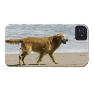 A wet dog at the beach. Case-Mate iPhone 4 case