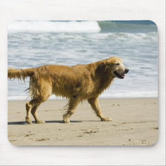 A wet dog at the beach. mouse pad
