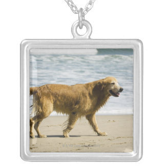 A wet dog at the beach. silver plated necklace