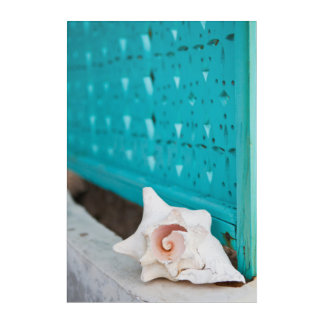 A White And Pink Jamaican Sea Shell Sits Alone Acrylic Wall Art