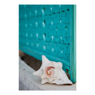 A White And Pink Jamaican Sea Shell Sits Alone Poster