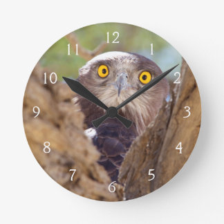 A White-breasted Snake Eagle Clock