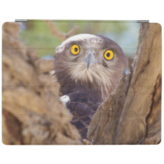 A White-breasted Snake Eagle iPad Cover