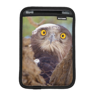 A White-breasted Snake Eagle iPad Mini Sleeve